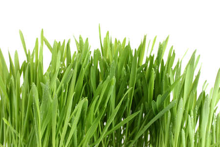 beautiful green grass isolted on white Stock Photo - 12800449