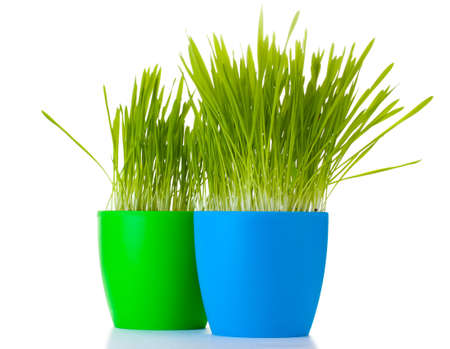 beautiful grass in a flowerpots isolated on white Stock Photo - 12800178