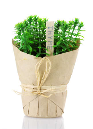 thyme herb plant in pot with beautiful paper decor isolated on white photo