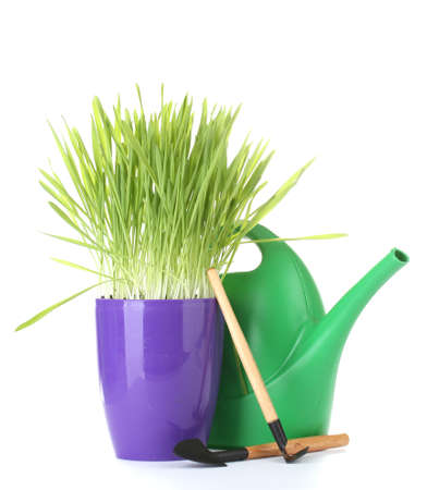 beautiful grass in a flowerpot, watering can and garden tools isolated on white photo