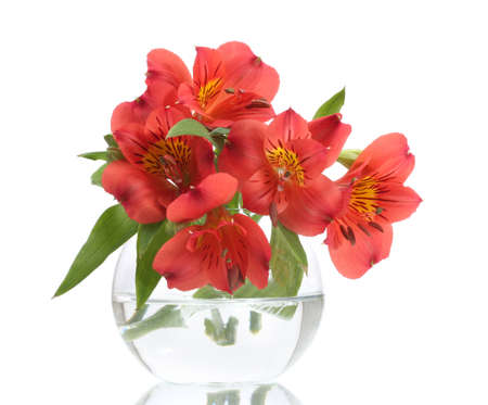 alstroemeria red flowers in vase isolated on white photo