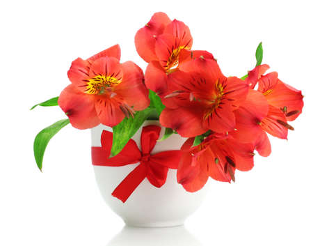 alstroemeria red flowers in vase isolated on white Stock Photo - 12979645