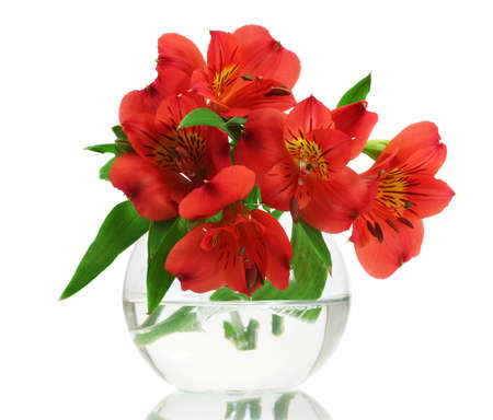alstroemeria red flowers in vase isolated on white Stock Photo - 13026584