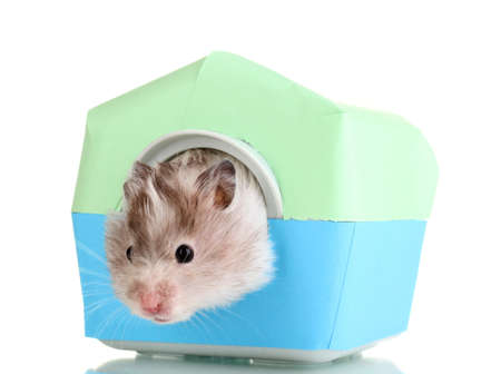 Cute hamster in house isolated white Stock Photo