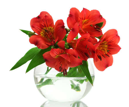alstroemeria red flowers in vase isolated on white Stock Photo - 13061690