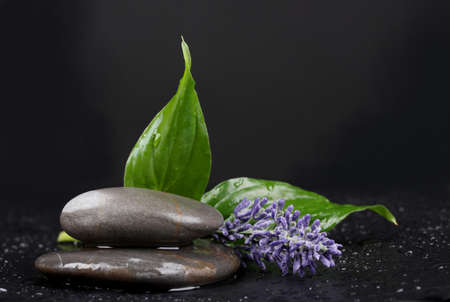spa stones with water drops, lavender and leaves on black background photo
