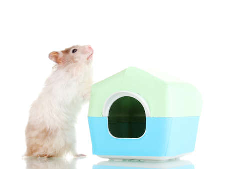 Cute hamster near house isolated white Stock Photo - 13128824