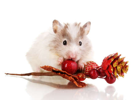 Cute hamster and autumn twig isolated white photo