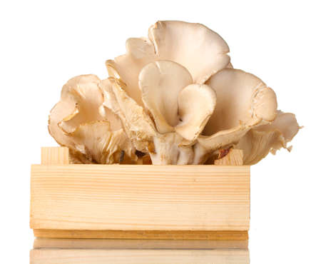 oyster mushrooms in wooden box isolated on white photo