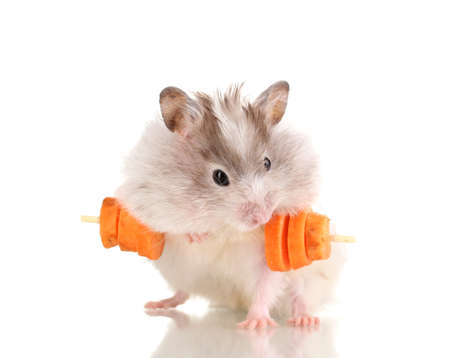 Cute hamster with carrot bar isolated white photo