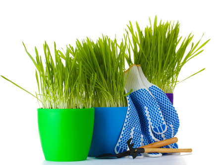 beautiful grass in a flowerpots, garden tools and gloves isolated on white photo