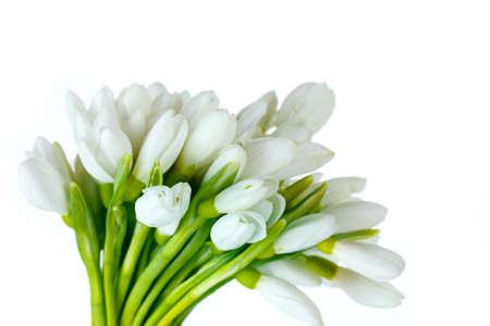 beautiful snowdrops isolated on white photo
