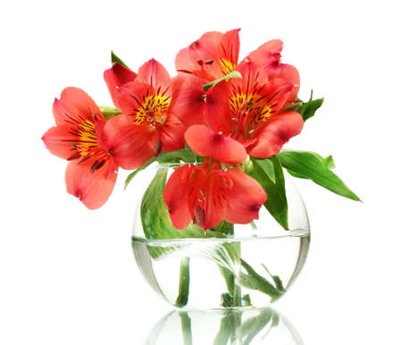 alstroemeria red flowers in vase isolated on white Stock Photo - 13355835