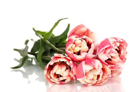 Beautiful tulips isolated on white Stock Photo - 13355817