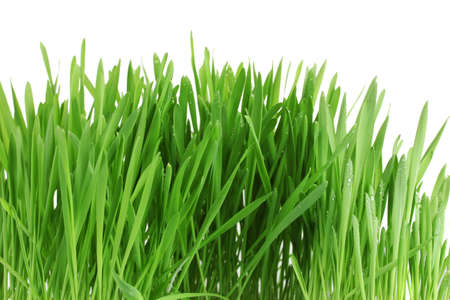 beautiful green grass isolted on white Stock Photo - 13370242