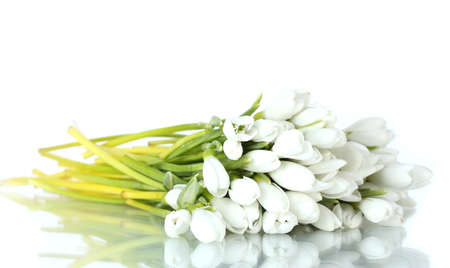 beautiful bouquet of snowdrops isolated on white Stock Photo - 13370056