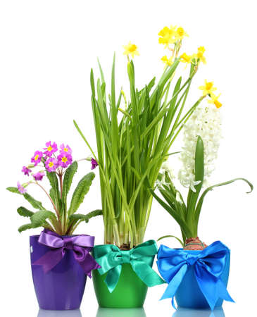 beautiful spring flowers in pots isolated on white Stock Photo - 13437854