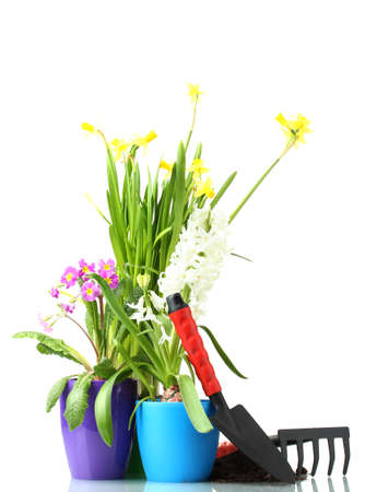 Beautiful spring flowers, soil and tools isolated on white photo