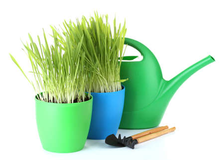 beautiful grass in a flowerpots, watering can and garden tools isolated on white photo