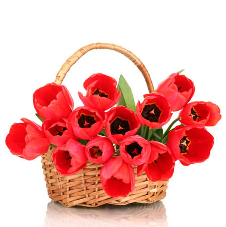 Beautiful tulips in basket isolated on white photo