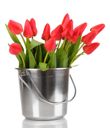 Beautiful tulips in bucket isolated on white Stock Photo - 13438446