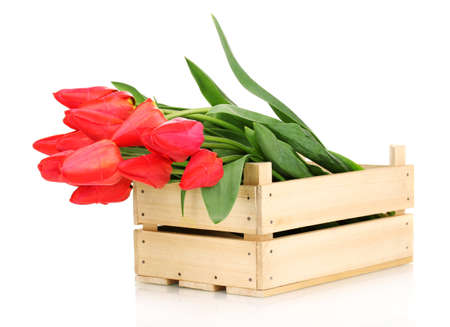 Beautiful tulips in crate isolated on white Stock Photo - 13438497