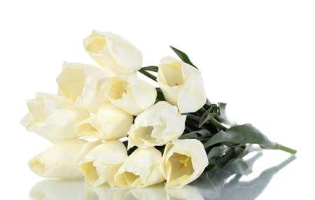 beautiful tulips isolated on white  Stock Photo - 13438369