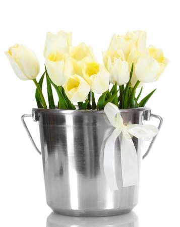 beautiful tulips in bucket isolated on white  photo