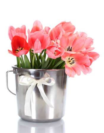 beautiful pink tulips in bucket isolated on white  photo