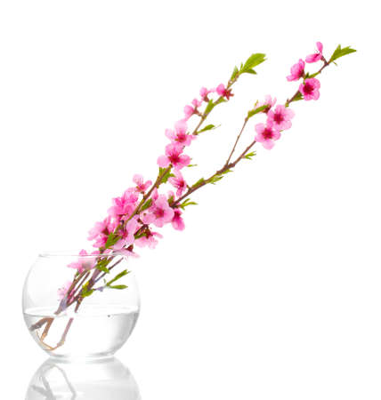 beautiful pink peach blossom in glass vase isolated on white photo