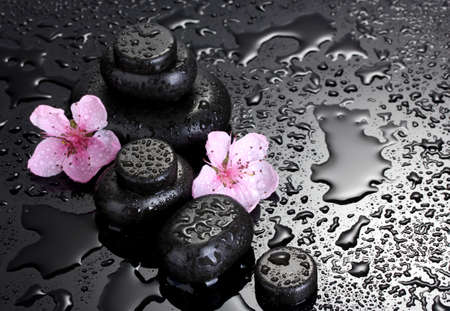 Spa stones with drops and pink sakura flowers on grey background Stock Photo - 13520851