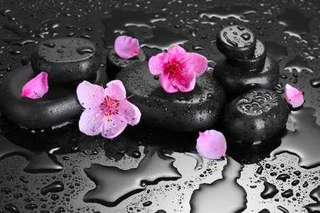 labourer: Spa stones with drops and pink sakura flowers on grey background  Stock Photo