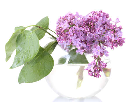 branch of lilac in a vase isolated on white photo