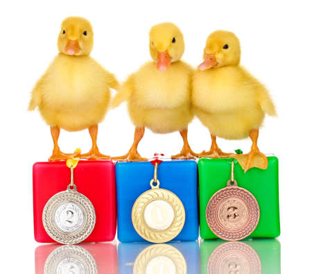 yellow duck: Three duckling on championship podium isolated on white Stock Photo