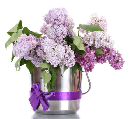 purple metal: beautiful lilac flowers in metal bucket isolated on white Stock Photo