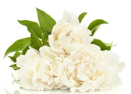 mooie pioenrozen op een witte
