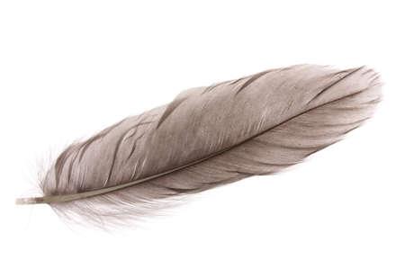 plume: Seule plume duveteuse isol� sur blanc
