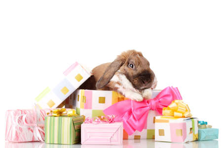 Lop-eared rabbit in a gift box with pink bow isolated on white photo