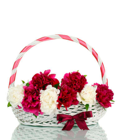beautiful pink and white peonies in basket with bow isolated on white Stock Photo