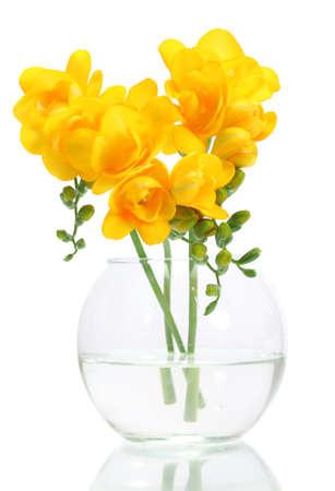 flower vase: Beautiful yellow freesias in vase isolated on white
