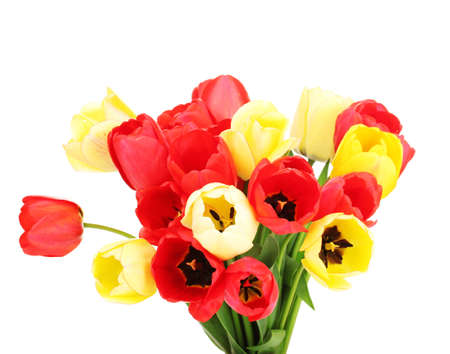 Beautiful tulips isolated on white Stock Photo - 13647976