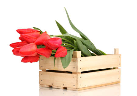Beautiful tulips in crate isolated on white Stock Photo - 13648263