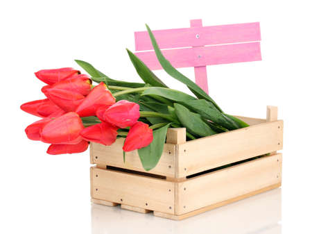 Beautiful tulips in crate isolated on white photo