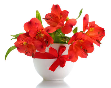 alstroemeria red flowers in vase isolated on white Stock Photo - 13648117