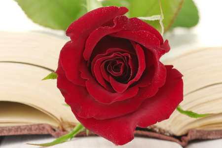 a bright red rose on the open book close-up Stock Photo - 13870845