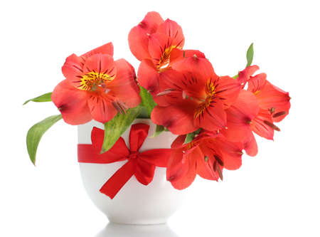 alstroemeria red flowers in vase isolated on white Stock Photo - 13855872