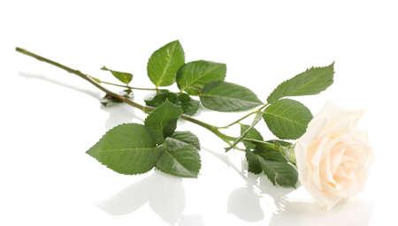 Beautiful rose isolated on white Stock Photo - 13874418