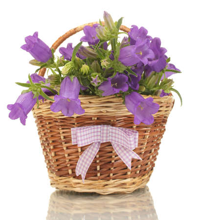 blue bell flowers in basket isolated on white photo