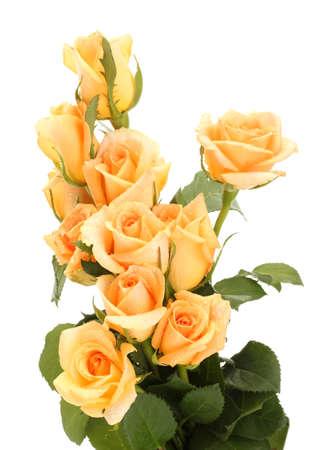 rosas naranjas: hermoso ramo de rosas aislados en blanco Foto de archivo