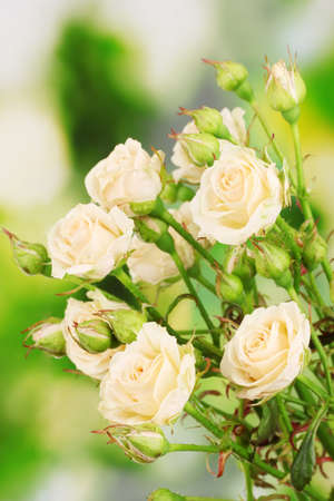 Beautiful small roses on green background